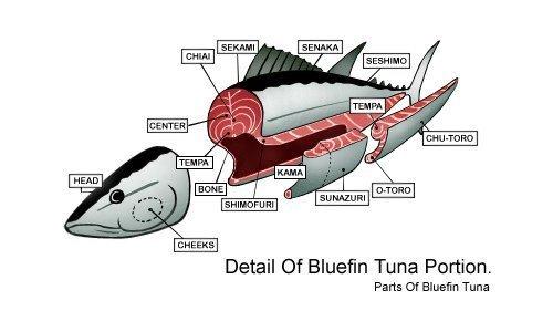 miglior tonno in scatola - parti del tonno